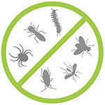 Pylos Pest Control - Απολύμανση - Απεντόμωση - Καταπολέμηση παράσιτα - τρωκτικά