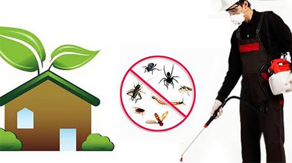 Pylos Pest Control - Υπηρεσίες Απεντόμωση