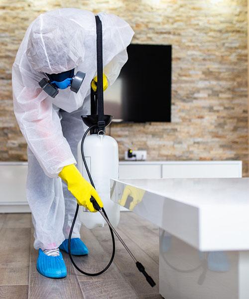 Pylos Pest Control - Υπηρεσίες Απολύμανση
