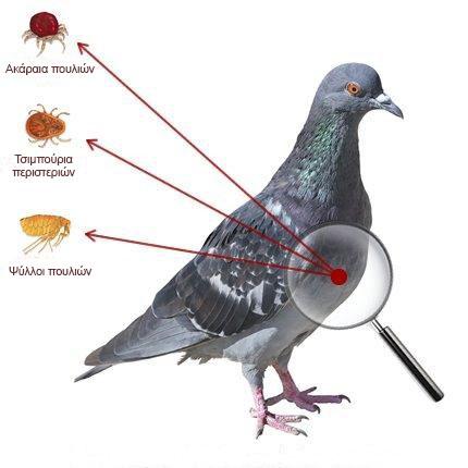 Pylos Pest Control - Υπηρεσίες - Απώθηση πτηνών