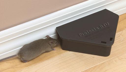 Pylos Pest Control - Υπηρεσίες - Μυοκτονία